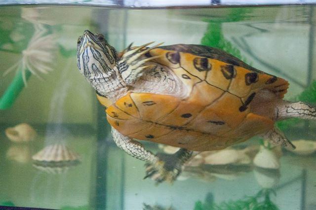 turtle-543346_1280