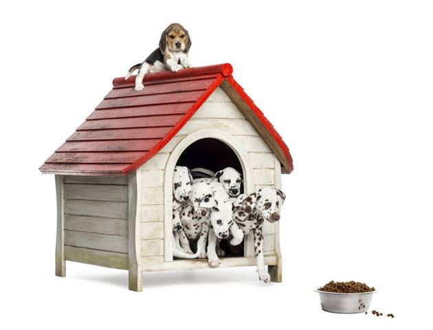 Group of dog puppies playing with a dog kennel, isolated on white