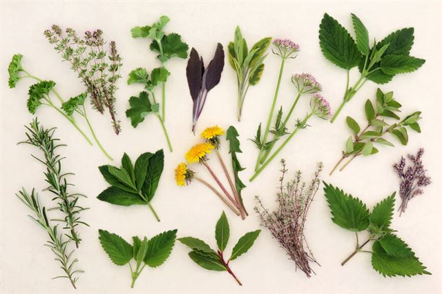 Herbal Nature Study