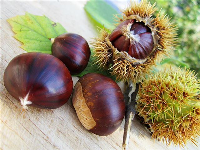 chestnuts-58410_1280