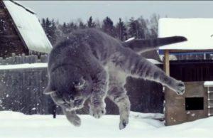 Кот пинок