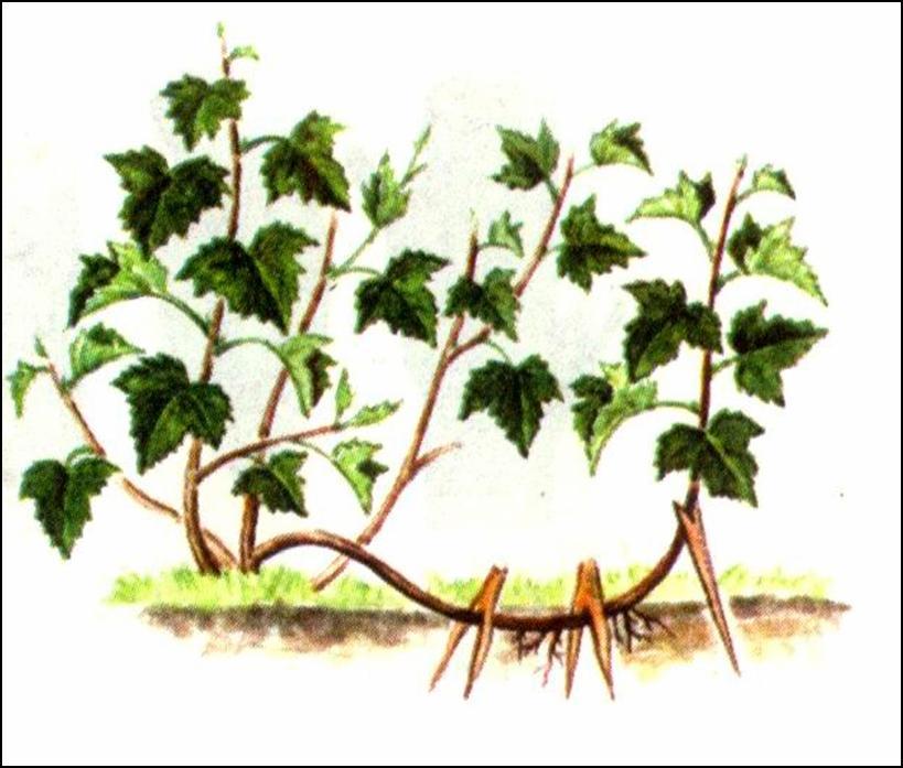 Как, по-вашему, размножаются растения?