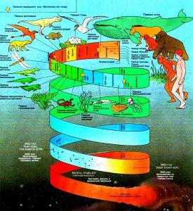 Эволюцию и распределение живых организмов на земле