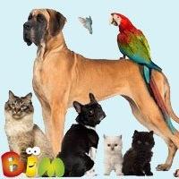 Группе домашних животных?