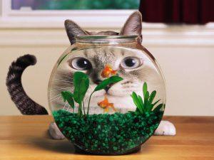 Кот ловит рыбок в аквариуме