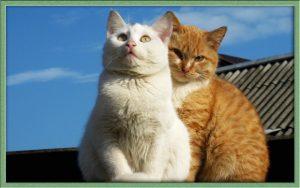 Котиках и кошечках