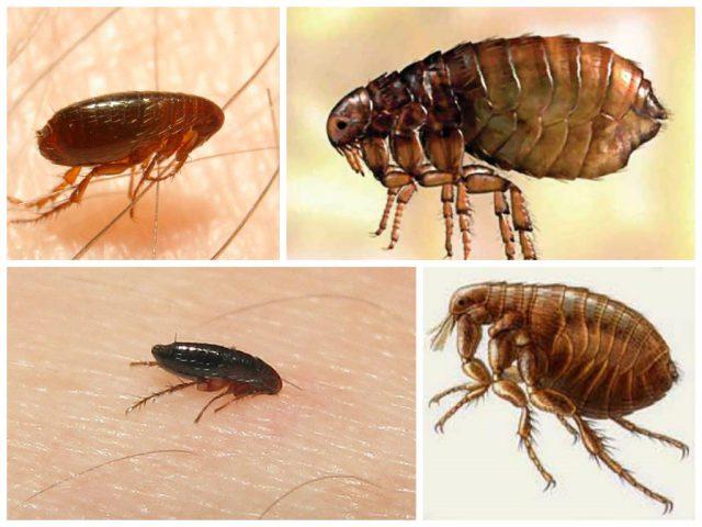 борьба с паразитами в организме народными средствами