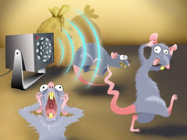 Как избавиться от крыс ультразвуком